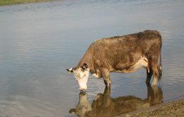 Dictado La Vaca Cega