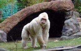 Dictado Zoo Barcelona